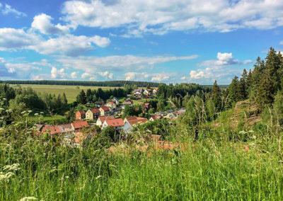 Tanne im Harz Ostteil