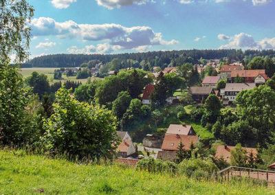 Tanne im Harz Westteil
